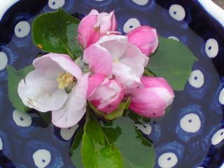 Apple Blossom Thank you