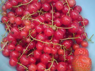 Blue redcurrants