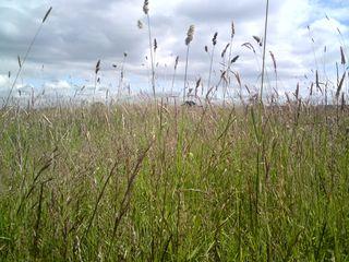 Field by Haroldswood
