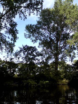 River Dee 5