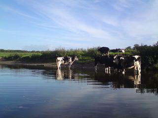 River Dee 7