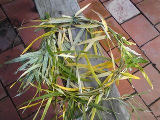 Circle of willow