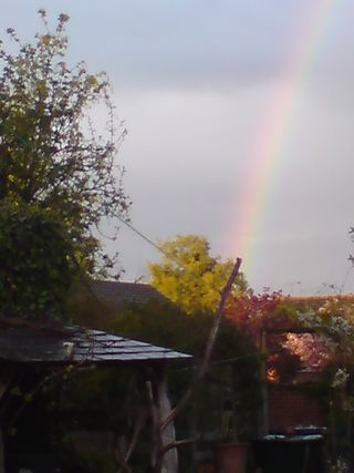 Rainbow over the garden