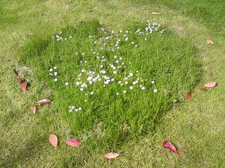 Lawn heart
