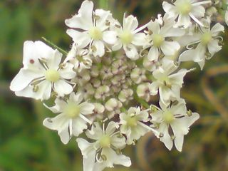 Detail of white flower