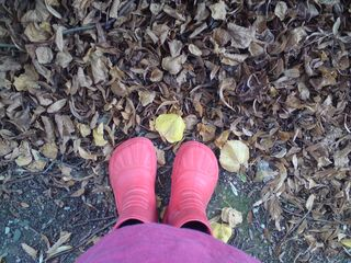 Red boots - autumn leaves