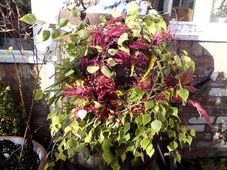 Finished autumn leaf wreath