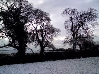 Giants in the snow