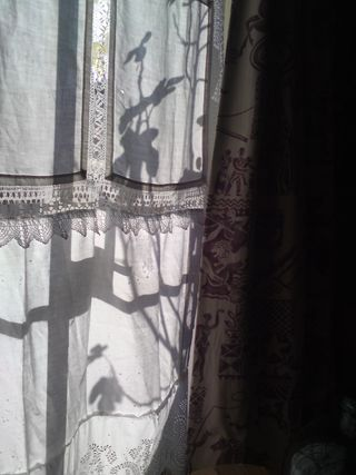 Fig through the curtain